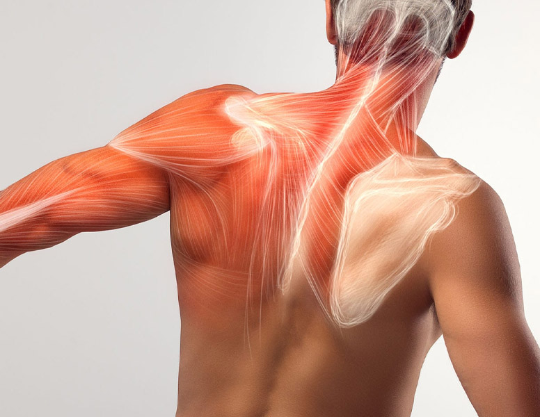 Supportive Stretching Exercise for the Shoulder